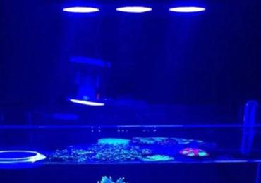 iluminação de aquário