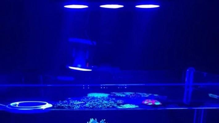 Iluminação do aquário