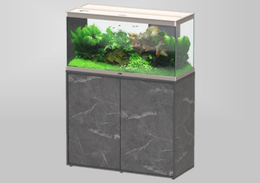escolher aquário